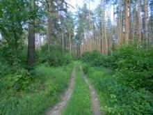 Видеонаблюдение в лесу
